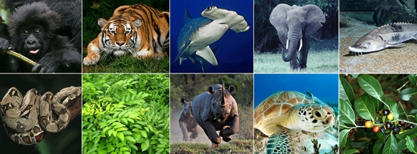 CITES meets as 'wealth' is replacing 'health' as a driver of wildlife consumption