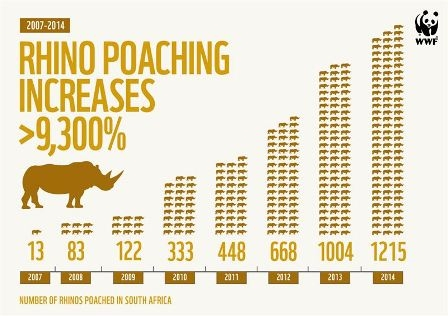 Make or break year for South Africa's rhinos after poaching hits record high