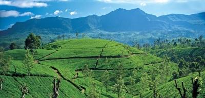 Sri Lanka Tourism to take Tea theme at WTM 2015