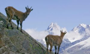 Global Wildlife populations decline by 58 percent