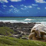 Galapagos Islands — Konstik/Istock.com pic via AFP